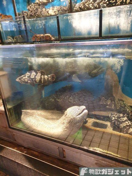 台北 旅行記 魚屋