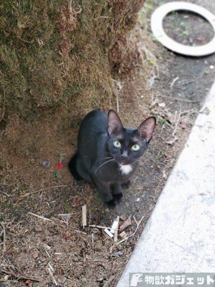 マレーシア 旅行記 猫